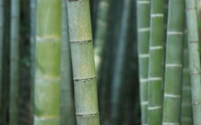 Bamboo Toliet Paper: Is It Eco-Friendly?